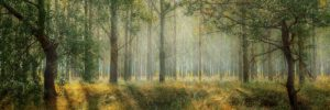 Light streams through the tops of the trees in a deciduous forest with a grassy floor.