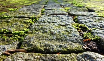 Moss grows on the cobble stone wall.