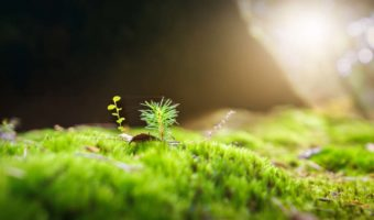 A small green tree, tiny, sprouts out of the mossy forest floor.